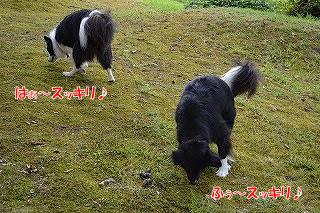 20130817_oyu_run04.jpg