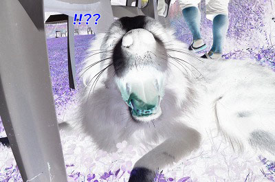 20130922-23_wanw16.jpg