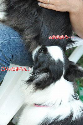 20130922-23_wanw30.jpg