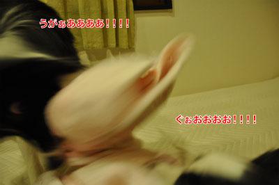 201407hipp01.jpg