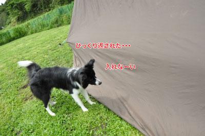 2014083031wancan23.jpg