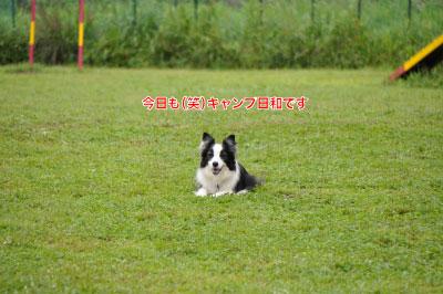 2014083031wancan6.jpg