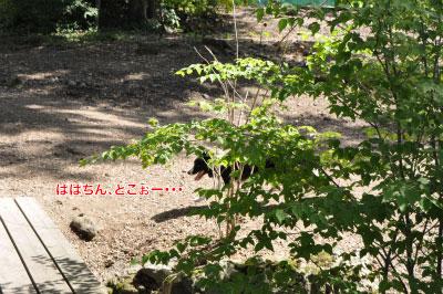 20140914dv30.jpg