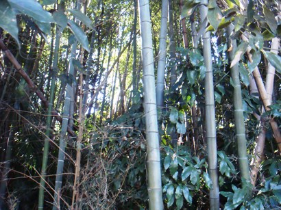 ままともやの竹林