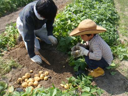パパとじゃが芋収穫中
