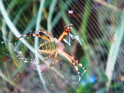 クモの巣も美しい