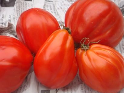 規格外トマト(加熱用)