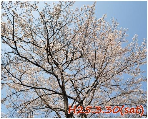 1_20130331013021.jpg