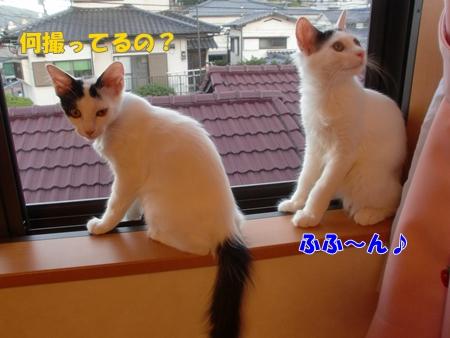 CIMG8863_20110803141549.jpg