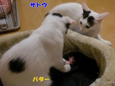 CIMG8881_20110806002957.jpg