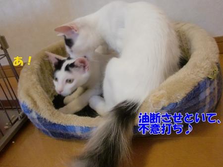 CIMG9051_20110806002955.jpg