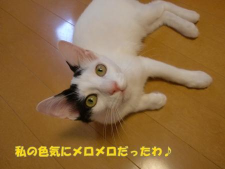 CIMG9065_20110810011418.jpg
