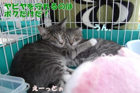 CIMG9197_20110822000436.jpg