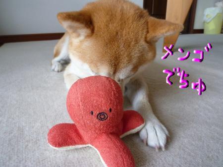 snap_mameshibakonatsu_201093232248.jpg