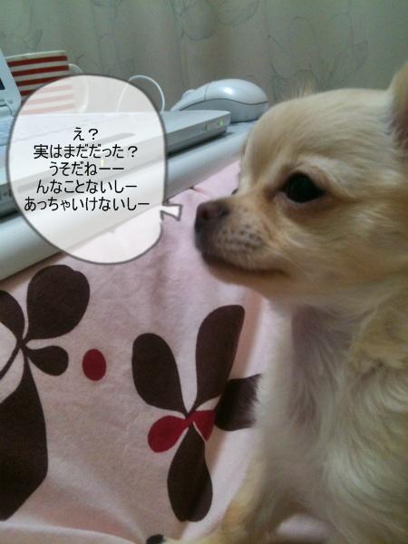 new_013.jpg