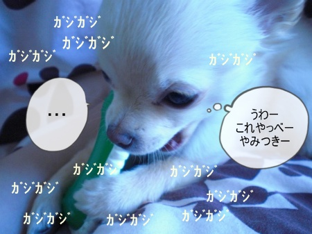 new_CIMG2506.jpg