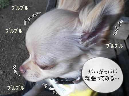 new_CIMG2511_20120330142322.jpg