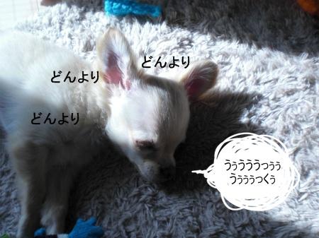new_CIMG2580.jpg