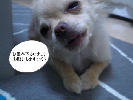 new_CIMG2793.jpg