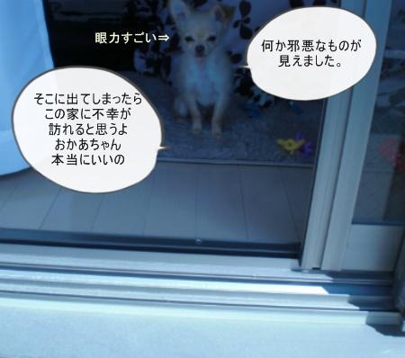 new_new_CIMG2568.jpg