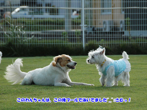 DSC_0389_20111004203732.jpg