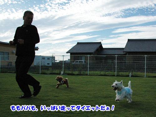 DSC_0499_20111004203940.jpg