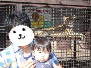 息子くんとライオン