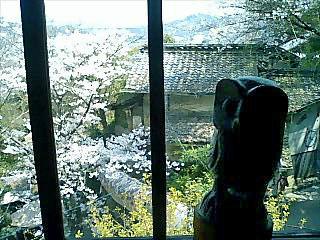 2012尾道梟1new