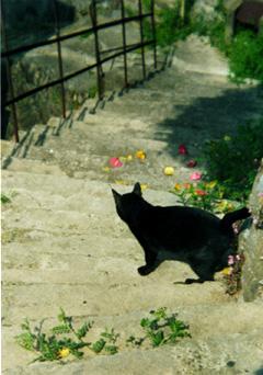 2012尾道黒猫b