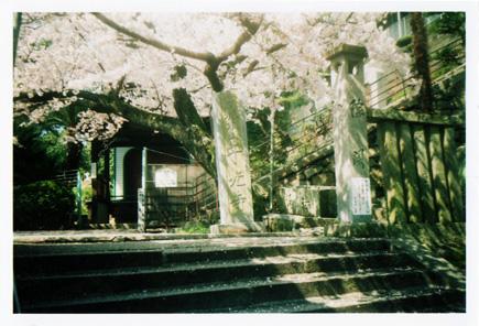2012尾道桜寺石段bb