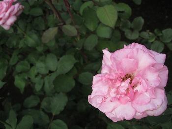 furukawa-garden10.jpg