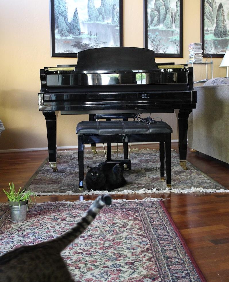pianocats.jpg