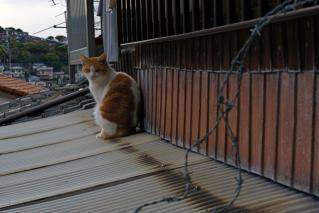 猫41FK