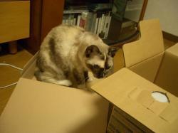 箱入り娘マーブル1