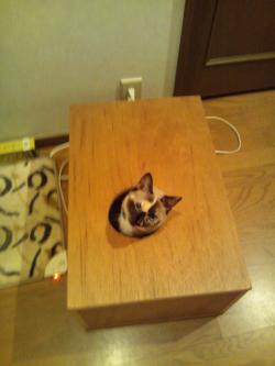 マーブル木の箱