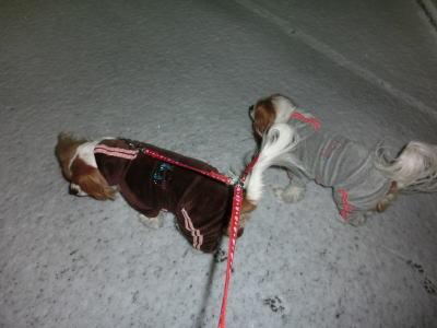 今朝の雪3