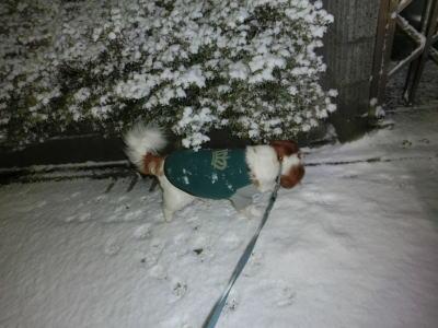 今朝の雪2