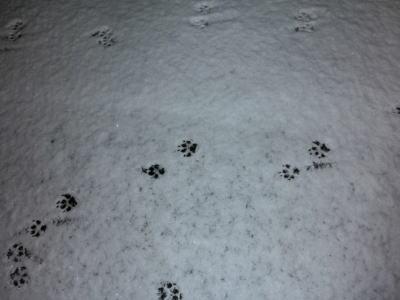 今朝の雪7