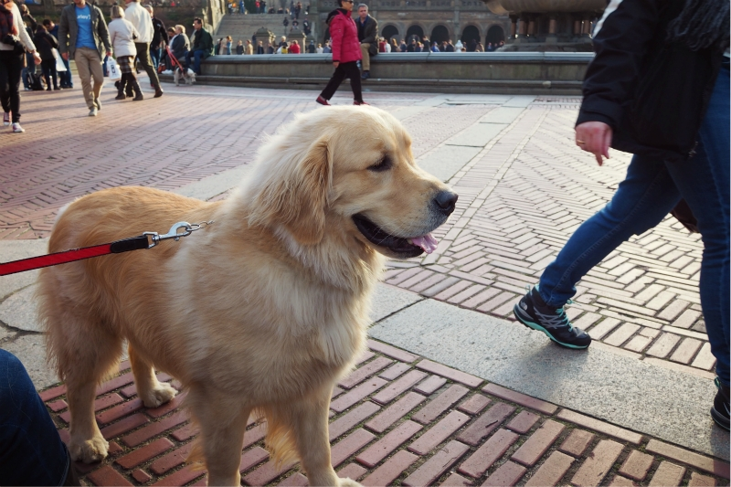 Nydog29.jpg