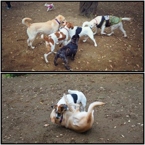 pageyoyoogidogrun01.jpg