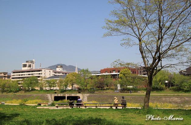 a3-kamo413.jpg