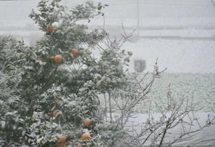 2013年1月14日雪成人式