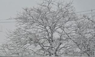 2013年1月14日雪2