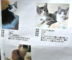 ワンクル写真参加猫