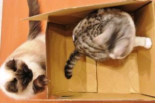 めぐの箱にごま