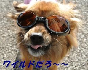 ワンクル 30ワンズ卒業犬