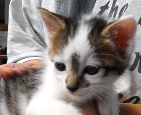 べすさん子猫2