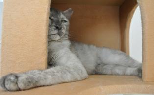 ハーブ猫タワー2