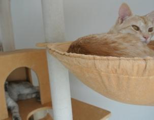 チャッピとハーブ猫タワー