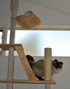 ちゃっぴとめぐ猫タワー